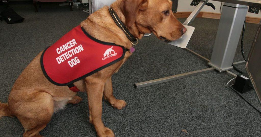 perros detectores de cancer