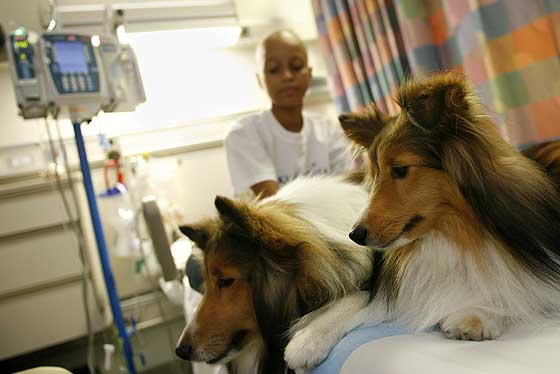 perros entrenados para detectar cancer