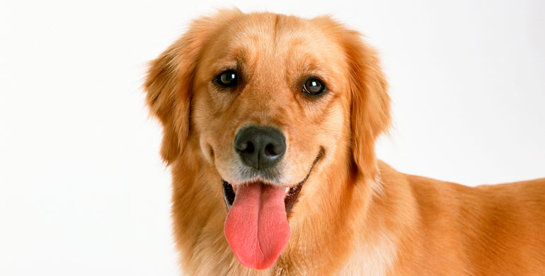 perros huelen para detectar cancer