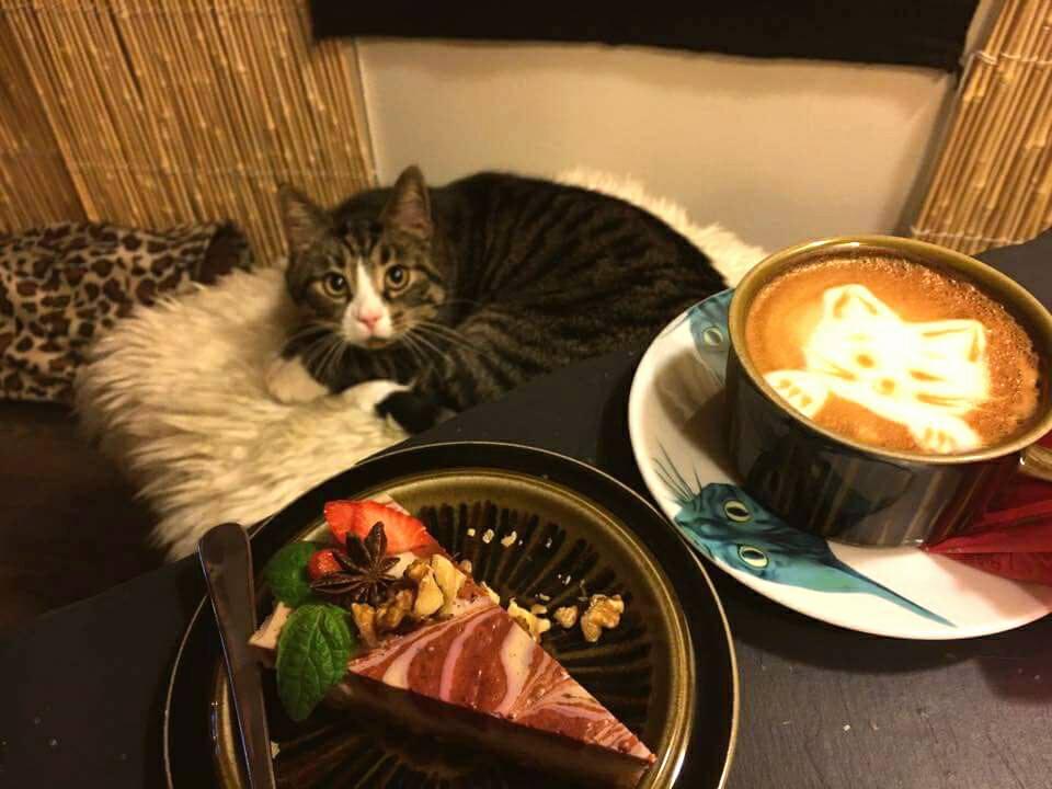 Cafetería-para-gatos