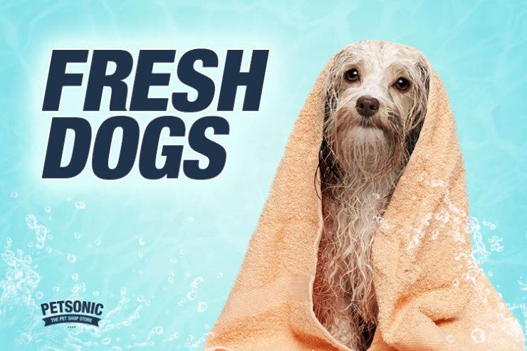 fresh dogs