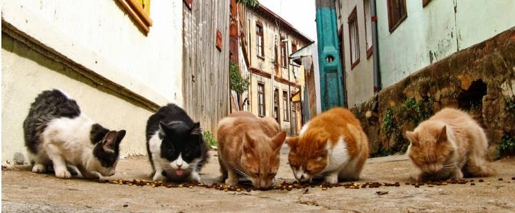 Alimentar-gatos-callejeros-Malaga