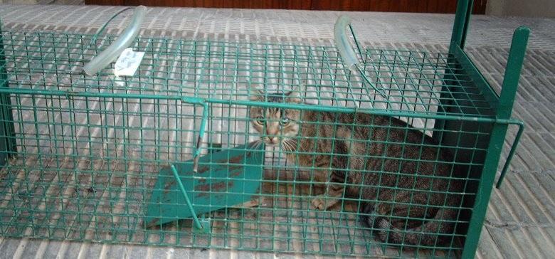 gato capturado