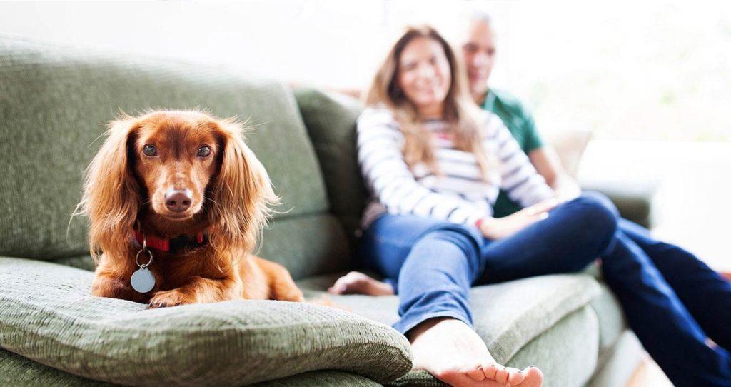 perro sofa vacaciones