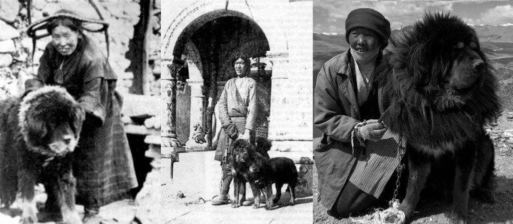 mastin tibetano historia