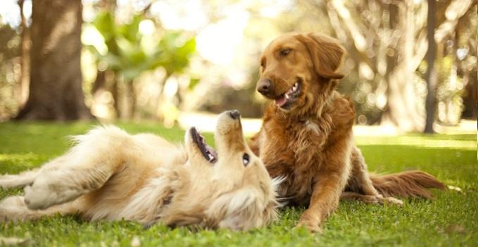 dogs team