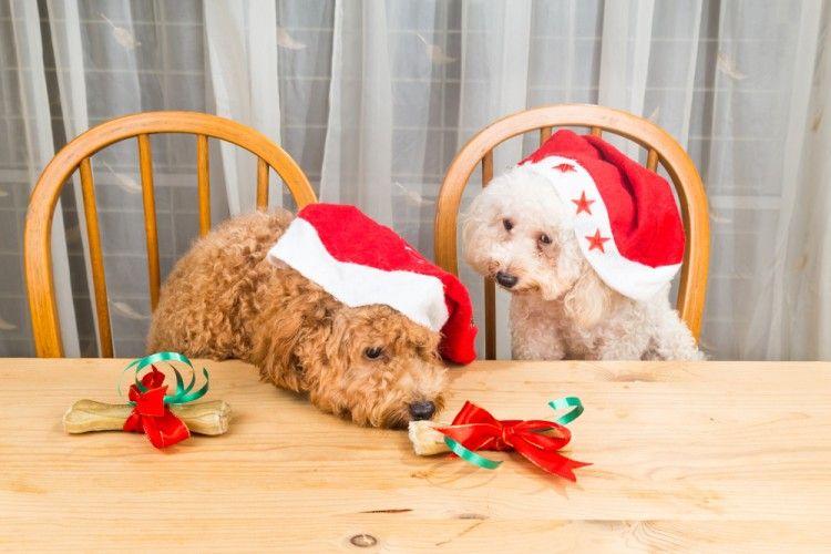 perros-alimentos-peligrosos-navidad-toxicos1-art