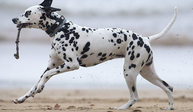 chien sportif 2