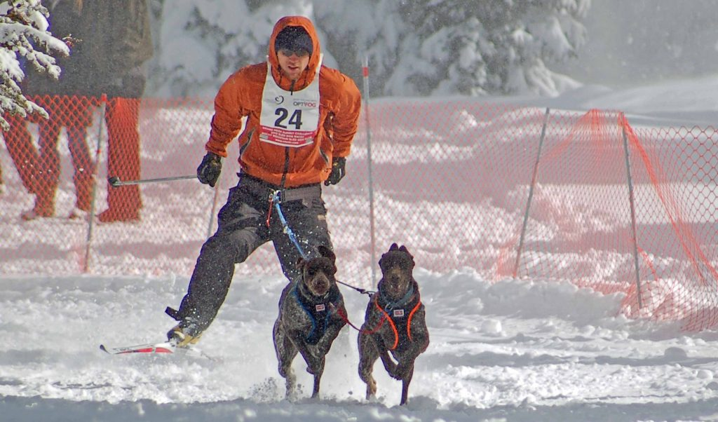 perro de deporte braco nieve