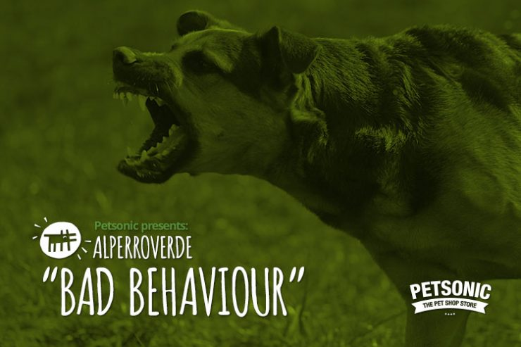 ALPERRO (agresiv)_Post Blog