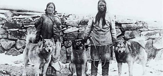 malamute historia
