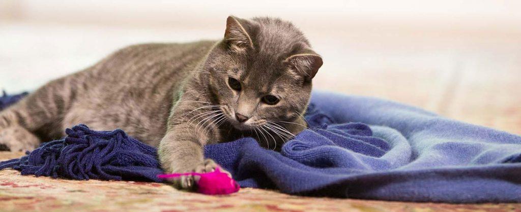 mascotas sénior gato