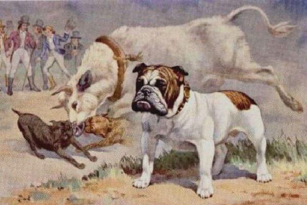 bulldog-inglés-historia