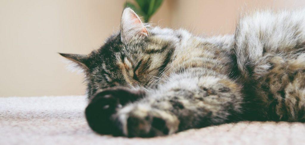 gato estirado