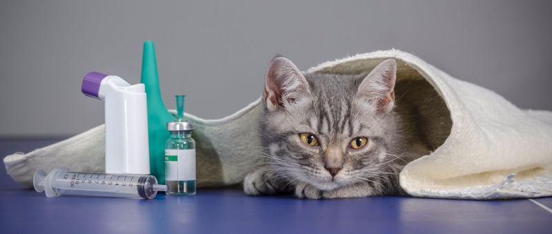 principales-enfermedades-gatos