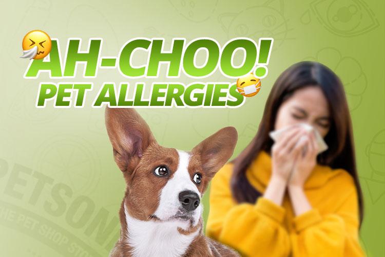 alergia a los perros y gatos