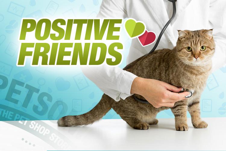 Qué Significa Tener Un Gato Positivo Descúbrelo En Este Artículo